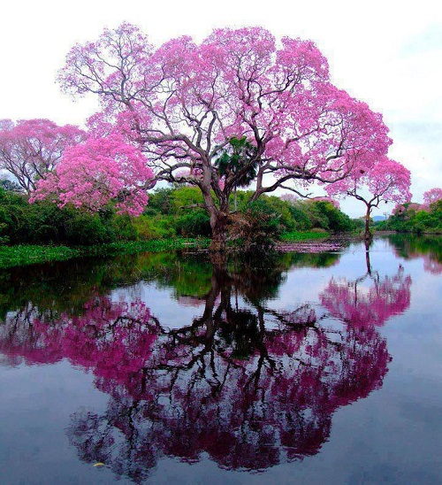 Nature Deficit Disorder Remedy - Beautiful Tree